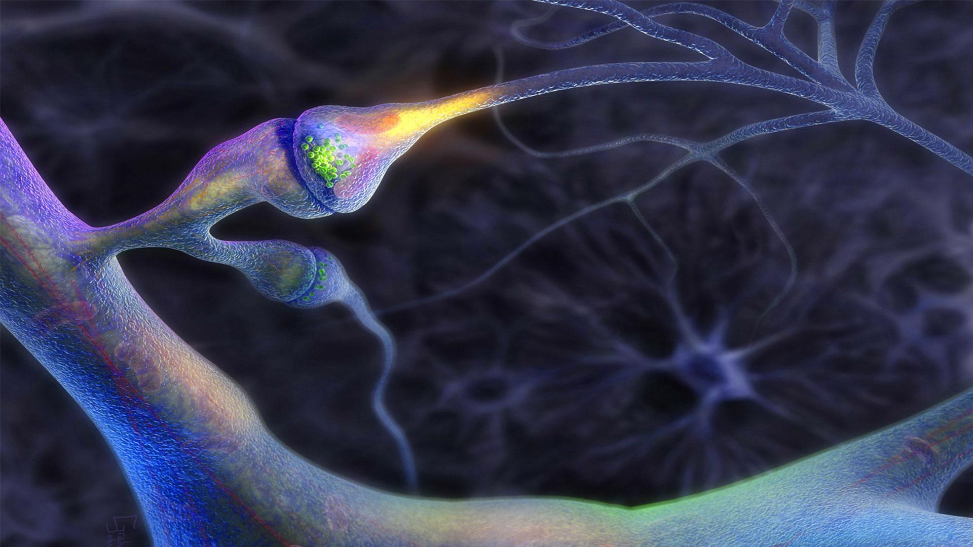 Осъзнаване и нервна система